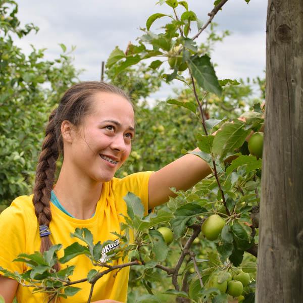 Beim Obstbau
