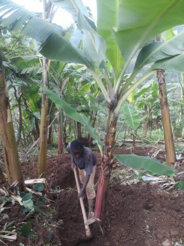 Obstbaumsetzllinge für Kinderfamilien